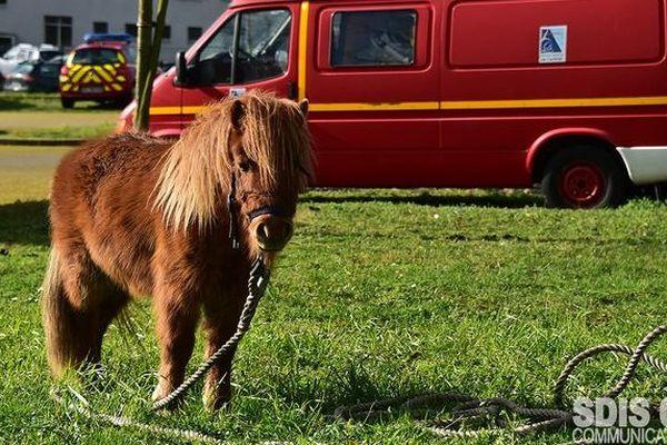 Recueilli par les pompiers le 16 février, le poney a un temps trouvé refuge au parc Foch avant de rejoindre les locaux de la police municipale.