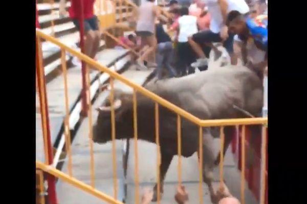 Le taureau a fait un bond impressionnant jusque dans l'arène catalane, blessant plusieurs personnes