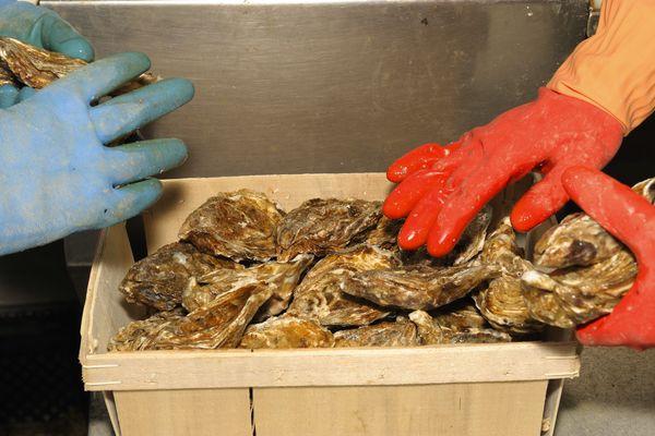 Les entreprises ostréicoles de Charente-Maritime recherchent des saisonniers pour la mise en bourriche.