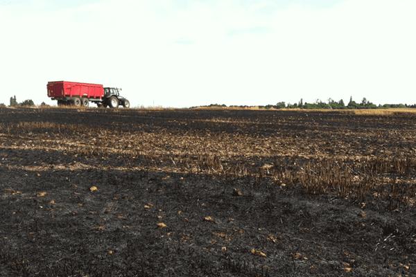 Courtenay (Loiret) : un agriculteur a perdu 10% de sa récolte d'orge d'hiver dans un incendie.