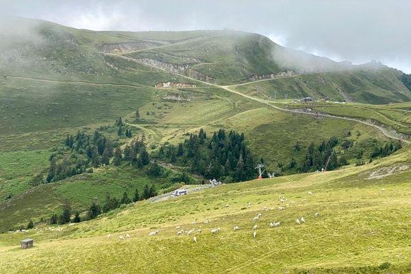 Une estive à Ustou en Ariège. Sur cette commune 4 ours se seraient approchés à plusieurs reprises d'un troupeau de brebis malgré la présence d'une brigade d'effaroucheurs