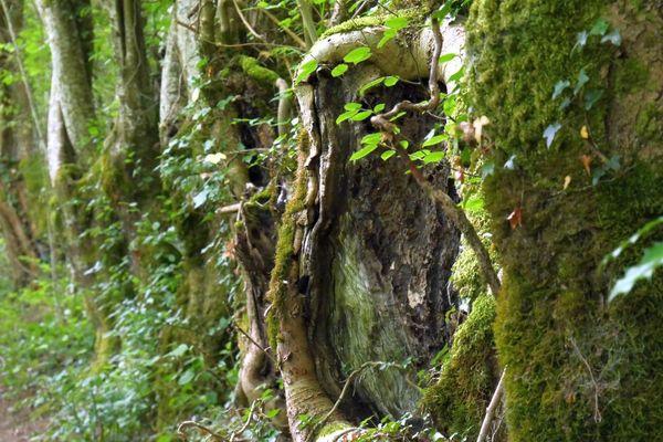 Un chemin forestier sur le circuit Avallon Découverte