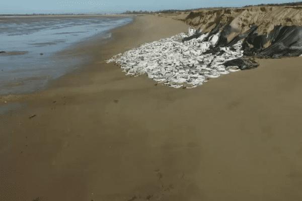 2550 sacs géants éventrés sur la plage de la Belle Henriette à la Faute-sur-Mer