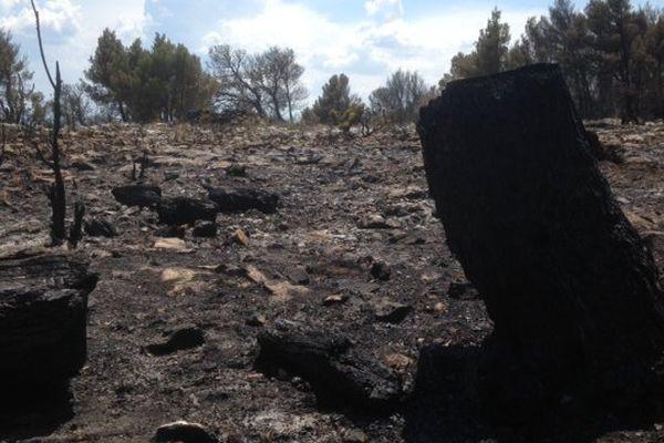 Aude - le Massif de la Clape, près de Narbonne, après un incendie - 8 juin 2015.