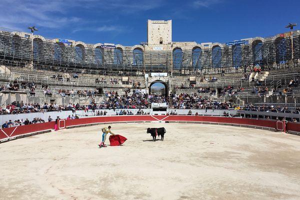 Le novillero français Adam Samira face à un jeune taureau à la Féria d'Arles, le 31 mars 2018