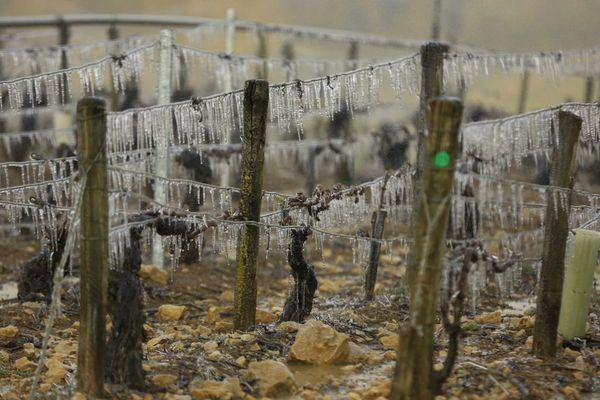 Paradoxalement, le réchauffement climatique rend la vigne plus vulnérable au gel.
