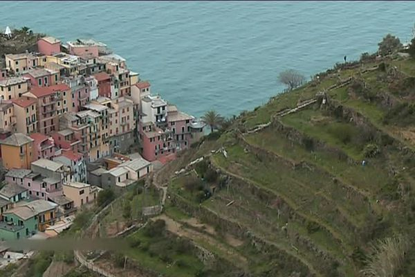 Dans les Cinque Terre, des vignes à perte de vue