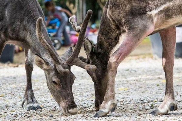 la ferme pédagogique du Paradis, et ses 200 animaux, accueillait 25.000 visiteurs chaque année.