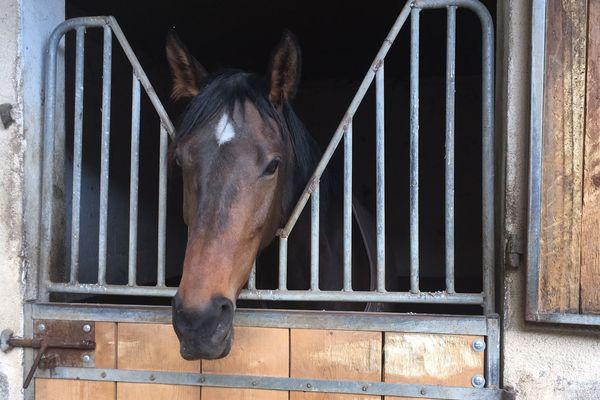 20 chevaux sur 130 ont été touchés par la grippe équine au centre d'entraînement de l'hippodrome de Moulins dans l'Allier.