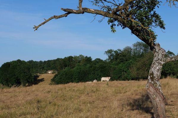 Les éleveurs doivent acheter du fourrage pour nourrir les animaux en raison de la sécheresse