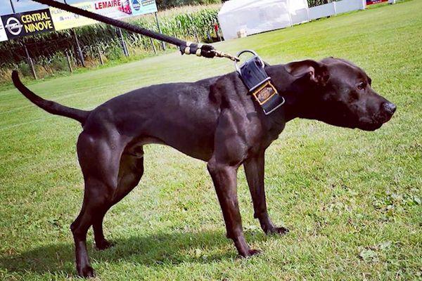 Curtis, le chien de Christophe Ellul