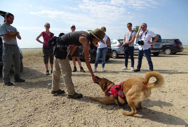 Le jeu est utilisé pour entraîner les chiens