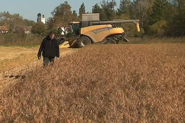 Bernard Poujol dans son champ de riz à Saint Gilles, dans le Gard - octobre 2017