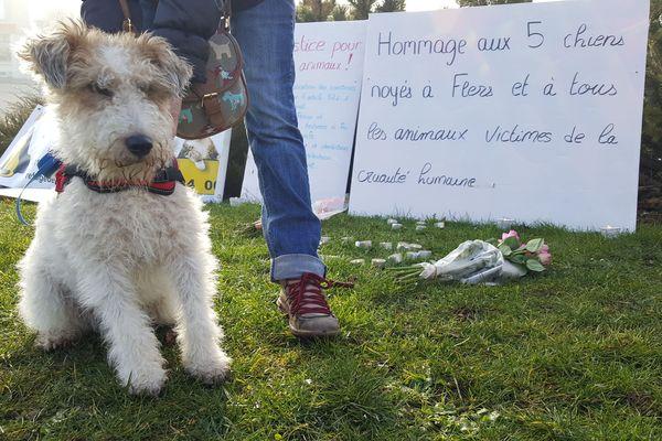 5 chiens noyés à Flers : un homme de 25 ans devant les tribunaux