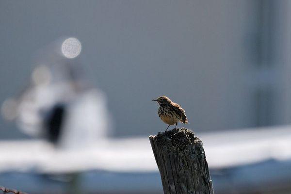 """L'oiseau """"Météo"""""""