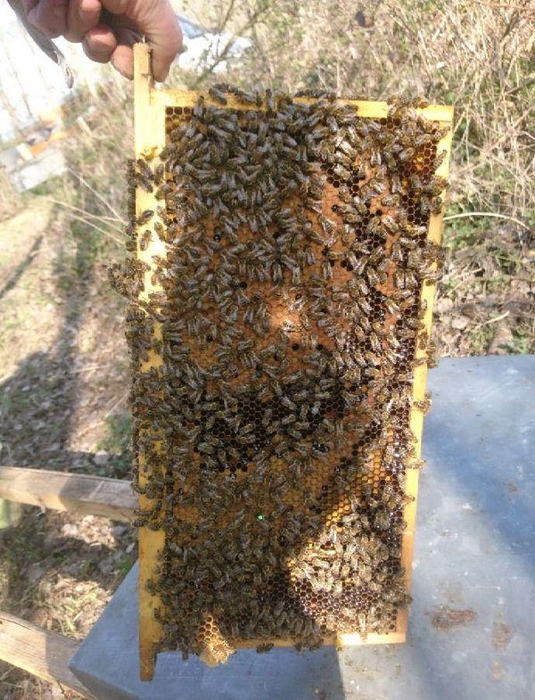 """""""Les abeilles de Corantin"""" en pleine forme"""