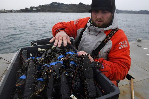 Bonne pêche pour Julien Robin à la pêche au homard en baie de Paimpol (22) - AFP 20/12/2016