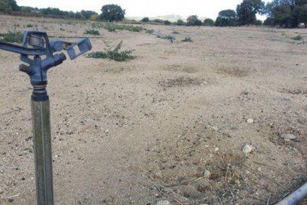 Les exploitants insulaires touchés par la sécheresse de 2017 vont pouvoir être indemnisés.