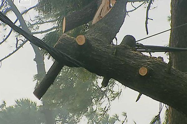 A Ronce-les-Bains, en Charente Maritime, au lendemain de la tempête, les dégâts sur le réseau causés par les chutes d'arbres ou de branches sont impressionnants