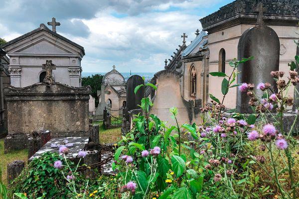 Au cimentière du Monumental à Rouen , la biodiversité ne s'est jamais aussi bien portée !