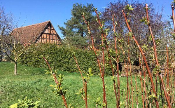Et pendant ce temps-là, les framboisiers bourgeonnent dans le jardin