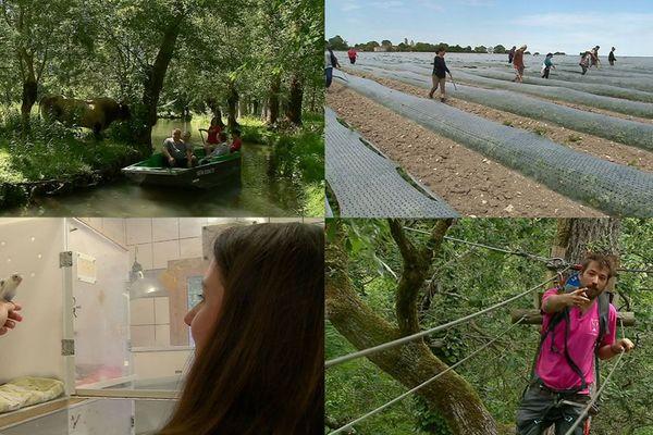 Bateliers du Marais poitevin, ramasseurs de melons, animateurs pour enfants, soigneurs animaliers... Il y en a pour tous les goûts.