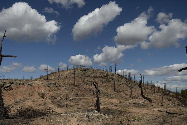 Des centaines de troncs calcinés transformés en croix par un pompier catalan