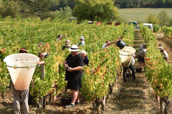 Prévues pour le milieu du mois d'août, les vendanges ont besoin de nombreux saisonniers pour cueillir et porter les grappes de raisins des vignes du Jura.