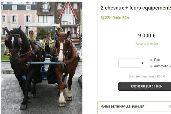 Capture d'écran du site internet Webencheres.com sur lequel la Ville de Trouville a mis les deux chevaux de son service hippomobile en vente