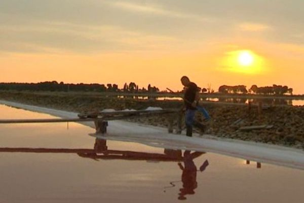 Rencontre au petit jour avec un saunier amoureux de son métier, à Aigues-Mortes, dans le Gard