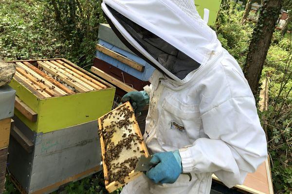 La Meurthe-et-Moselle compte une vingtaine d'apiculteurs. Leurs abeilles sont au travail pour produire le miel de printemps. La profession fait face au coronavirus.