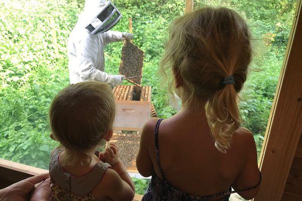 Derrière la vitre, on peut découvrir le travail de l'apiculteur.