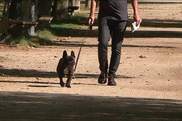 Les crottes de chien, un fléau pour les agents des espaces verts de la Fléche en Sarthe