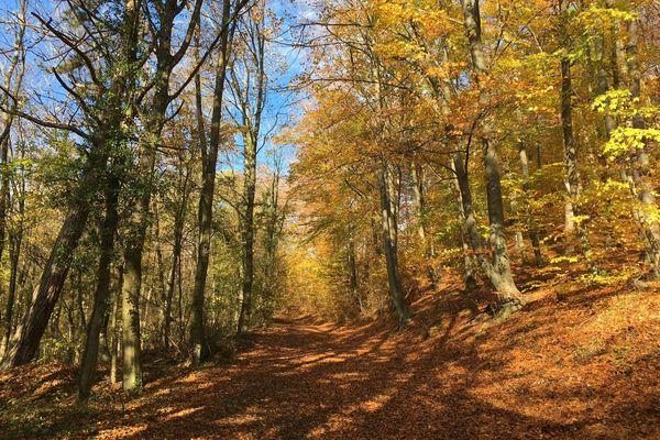 Forêt des Eparges. Meuse