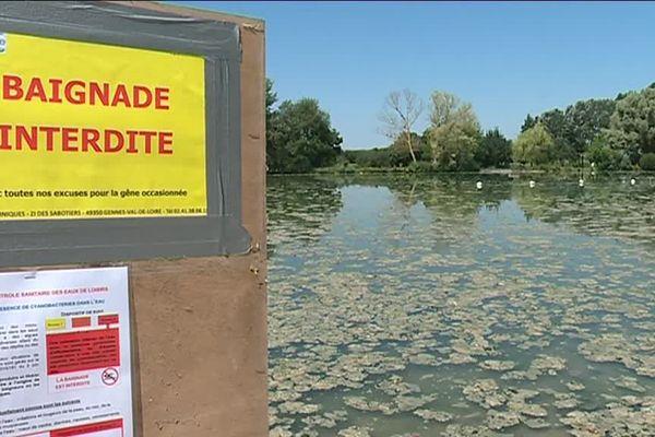 Les cyanobactéries prolifèrent dans les plans d'eau en raison des fortes chaleurs