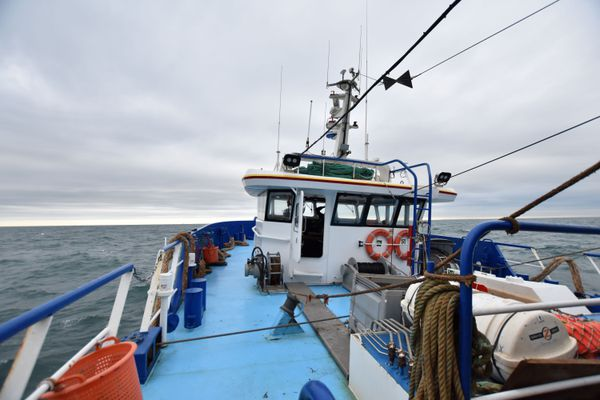 Les pêcheurs européens sont autorisés à pêcher dans les eaux britanniques mais devront reverser l'équivalent de 25% de leurs prises au Royaume-Uni à partir de 2026.
