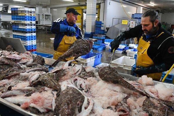 Débarque et tri du poisson à la criée du Guilvinec