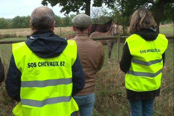 Ces amoureux des chevaux se relaient pour les surveiller dans le Tarn-et-Garonne