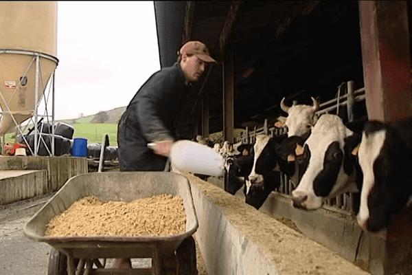 Mathieu Oyhenart à la tête de 49 vaches laitières ne s'en sort pas
