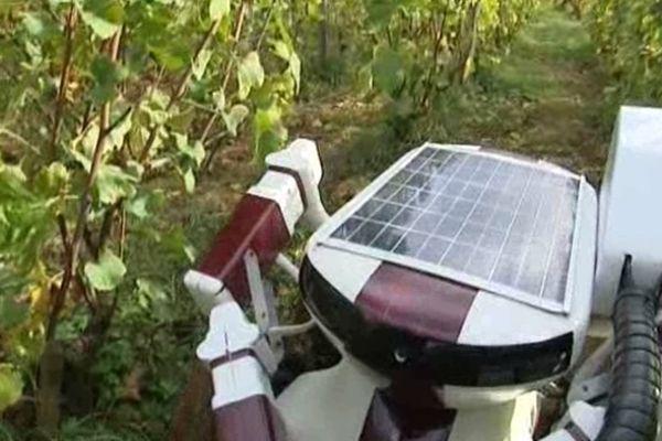 Le robot tailleur de vigne