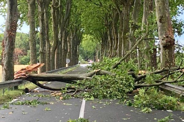 Un arbre couché au sol en raison de la violence des rafales de vent près d'Escalquens.