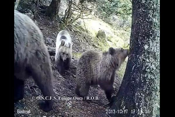 Havla et des deux oursons