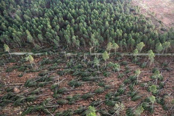 Déjà meurtrie en 1999, la forêt des Landes subissait à nouveau les assauts du vent en 2009 comme ici à Labouheyre. Stéphane Lefoll a promis 530 millions d'euros de l'Etat pour aider à reboiser.