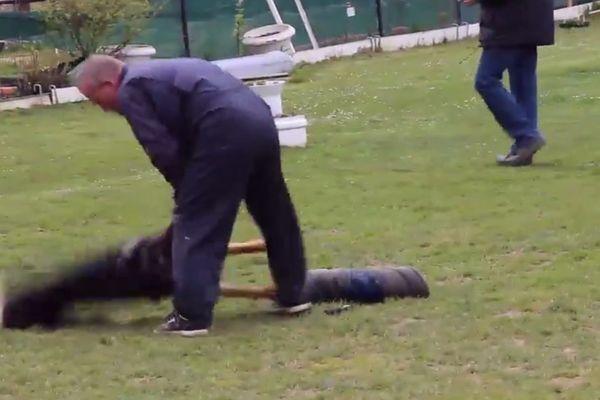 Le dresseur projette violemment le chien au sol lors d'un exercice.