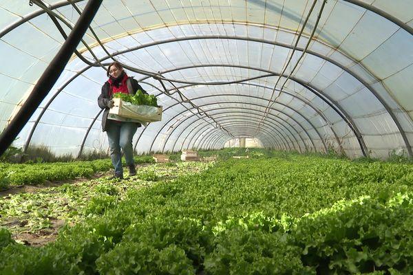 L'association Solidarité paysans du Gard suit 80 familles chaque année - mars 2021