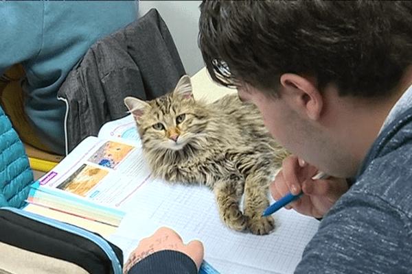 Le ronronnement du chat a des effet thérapeutiques apaisants et bienfaisants pour les enfants