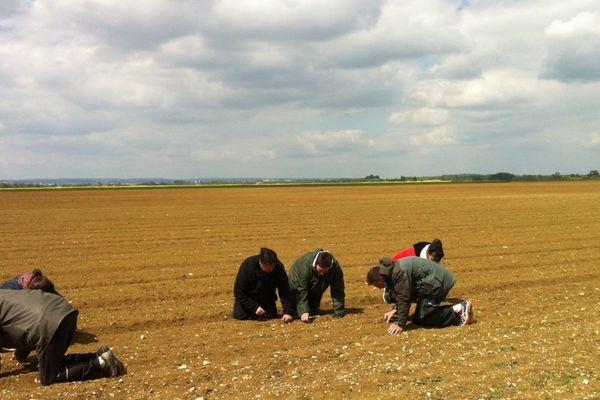 Le désherbage d'un champ d'oignons bio à Bretenière en Côte-d'Or