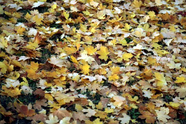 Le joli tapis d'automne ne se contente pas d'être esthétique, il est aussi utile.