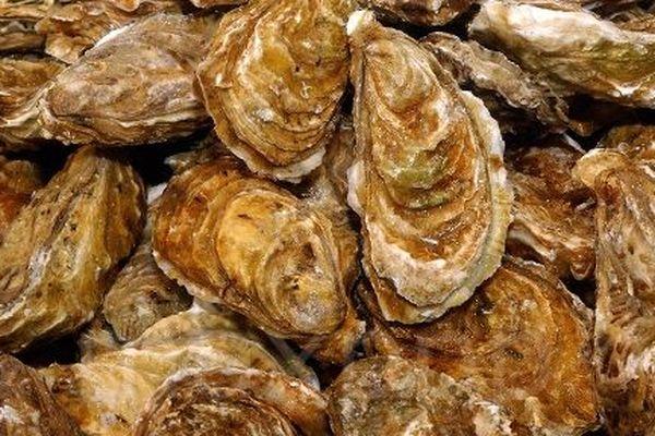 Les terroirs de l'huître en Nouvelle-Aquitaine