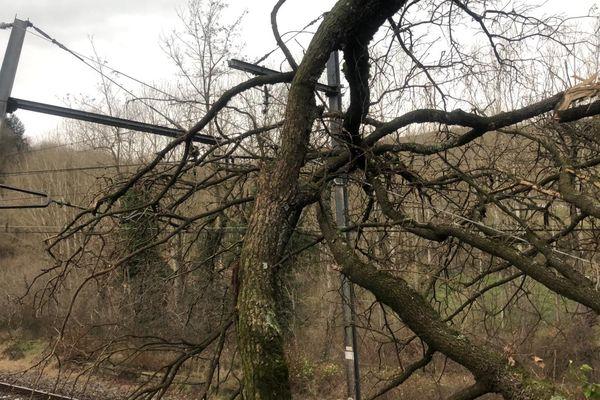 Un arbre tombé sur la voie ferrée entre Saint-Etienne et Lyon le vendredi 20 décembre 2019.